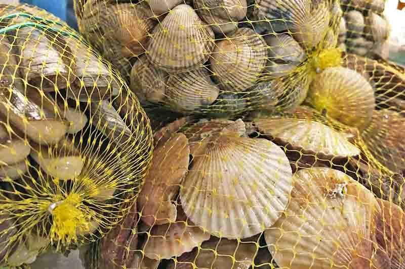 marisco en santiago de compostela